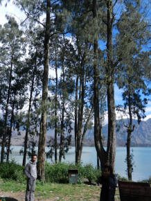 trees on rinjani mountain