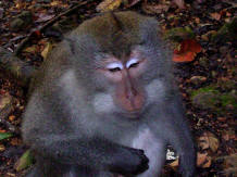 pusuk monkey forest