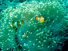view colorful fishes under water snorkeling